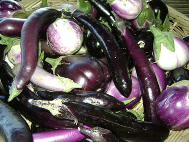 Maya's farm, eggplant