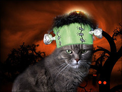 Halloweenkashim2
