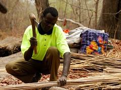 Cutting Reeds (Makgobokgobo) Tags: africa people namibia zambezi caprivi ngoma zambeziriver caprivistrip salambala salambalaconservancy