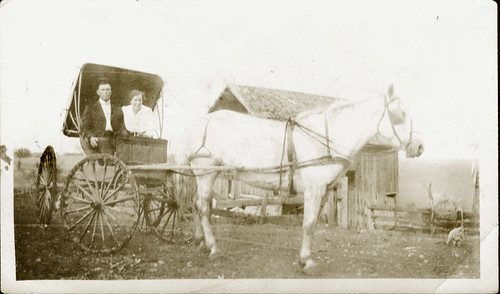 Man, woman, horse, buggy, chicken
