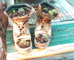 Hitchhicker Planters (joehall45) Tags: flowers cute garden boots planters unique rustic steps sunny badge porch travelers garder