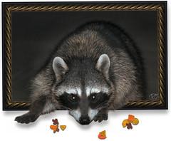 Raccoon OOB (BluAlien) Tags: life wild cute art animal fauna digital photoshop frames nikon framed surrealism wildlife digitalart surreal frame raccoon outofbounds oob photopostcard d40