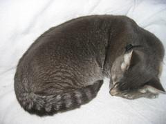 Snuggled Dexter