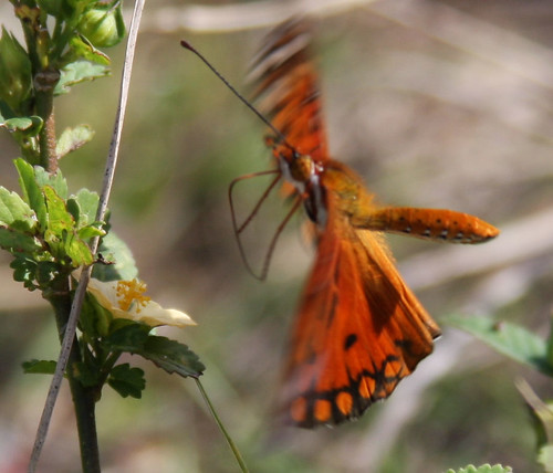 gulf frit in flight