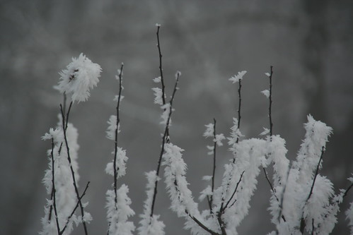 iarna in parc patru