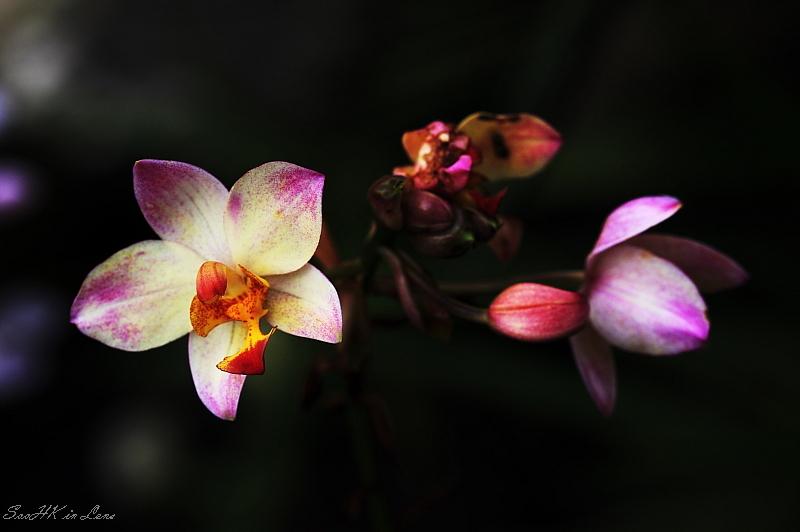 Argument @ Orchid Garden KL