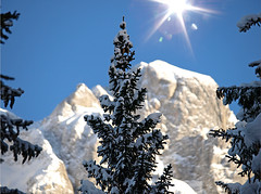 The Sun always shines on Dolomites (steve_steady64) Tags: trees winter italy sun white snow mountains montagne reflex olympus neve flare sole inverno trentino dolomites dolomiti brenta madonnadicampiglio folgarida naturesfinest zd zuikodigital mywinners stevegatto 2008stevegatto extremedesign 200mmed