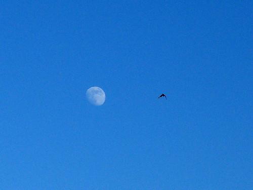 Moon Hawk