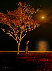 Thinking after midnight (khalid almasoud) Tags: moon man reflection tree art look night clouds work canon lens eos photo photographer shot expression d walk corridor center 400 midnight thinking after 24 kuwait 105  khalid voluntary        almasoud    tasweery 135829