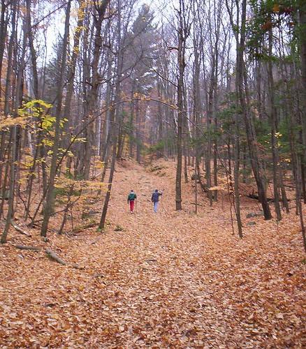 BuckMtn Trail