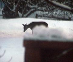 Deer_30108c