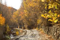 autumn-mohsen moossavi (7) (Mohsen MoossaviZadeh) Tags: iran  mashhad khorasan  torghabeh