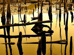 Beaver Swamp (Baab1) Tags: trees rot water sepia reflections nikon decay wildlife sunsets maryland swamps wetlands reflexions goldenhour beavers smorgasbord d60 southernmaryland goldenglobe marylandparks supershot princefrederickmaryland calvertcountymaryland mywinners abigfave supershots marylandstateparks diamondclassphotographer flickrdiamond naturewatcher colourartaward qualitypixels nikonflickraward beautifulsecrets marylandwetlands calvertcountyparks calvertcountywetlands marylandwildlifepreserves