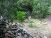 Départ de l'embranchement de la sente d'accès au canyon du Vivaghju : un beau cairn dorénavant !