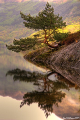 The Rowardennan Bonsai (Shuggie!!) Tags: longexposure reflection water landscape scotland williams karl loch lomond trossachs hdr anawesomeshot theunforgettablepictures alemdagqualityonlyclub vosplusbellesphotos mirrorser saariysqualitypictures karlwilliams obramaestra
