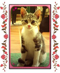 Linda  (aunqtunolosepas) Tags: pet cats pets cute love animal animals cat kitten feline phone bea k750i sweet ericsson sony sonyericsson adorable movil kitty kittens gatos cutie gato linda cachorro kitties gata felinos felino animales lovely cuteness gatitos mascotas gatita phoneshot impressedbeauty aunqtunolosepas thebiggestgroupwithonlycats masacota movilcamara gggcharmy