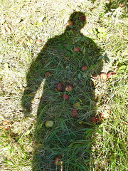 Orchard shadow