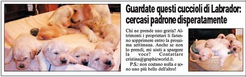 La Bufala dei Cuccioli di Labrador su Leggo