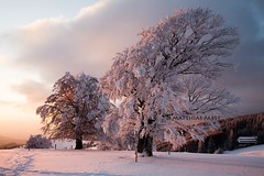 reloaded (Mace2000) Tags: schnee trees winter sunset snow nature clouds germany print landscape deutschland sonnenuntergang natur 5d landschaft bume schwarzwald blackforest schauinsland mace2000 img0650 countryscenery