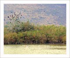 The birds of Hula Valley by vad_levin, on Flickr