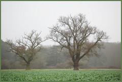 trees in winter .. ('John') Tags: loveit platinumphoto