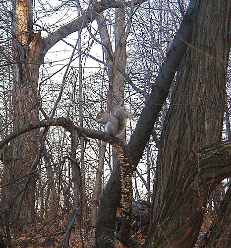Squirrel in CP