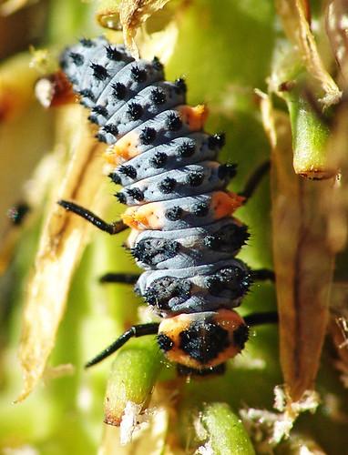 Caterpillar?