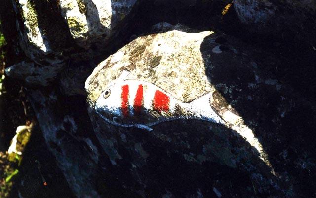 Peix de roca