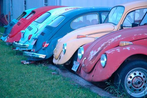 Dead Beetles' Society, Mesquite Texas