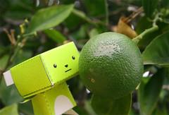 Green Orange (Star Guitar) Tags: orange tree cute green leaves fruit branches kawaii unripe mimmo minimimmo