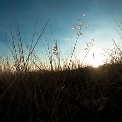 Behind Blue Eyes (Luis Montemayor) Tags: blue sunset sky grass azul mexico atardecer pasto cielo malinalco myfavs estadodemexico
