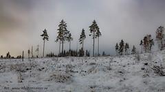 20170222100828 (koppomcolors) Tags: koppomcolors skog forest winter vinter värmland varmland sweden sverige scandinavia