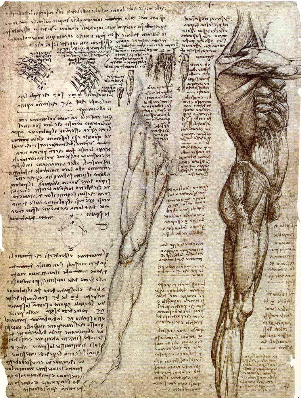 Leonardo Da Vinci: Los códices de Da Vinci