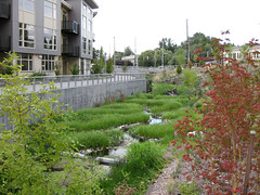 Thornton Creek water channel (by: SvR Design)