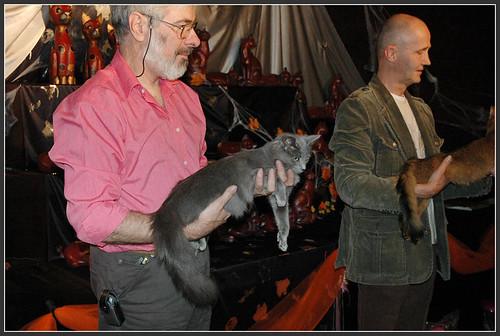 Cat show in Antwerpen 1788882459_73074260d6
