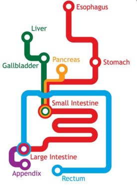 Digestive subway map by Jack Anderson