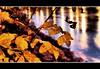 Circle Of Life (Jonny Jelinek) Tags: autumn reflection nature water leaves night wasser nightshot nacht herbst natur blaetter nachtaufnahme damncool masterclass impressedbeauty diamondclassphotographer thegoldenmermaid naturemasterclass