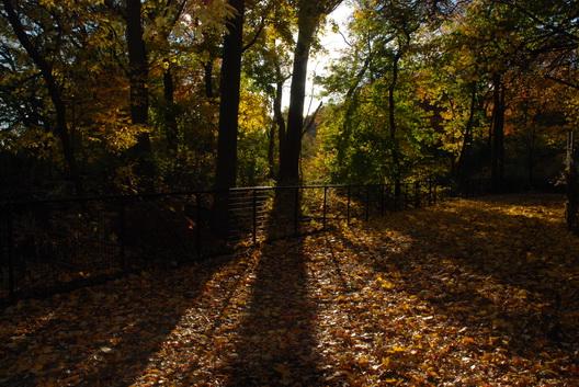 Prospect Park Tree Shadows
