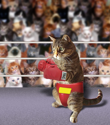 The Boxer  ~(CatChallenge#20)~