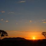 Sunset on savanna