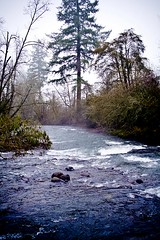 Misty River - where Crabtree Creek and Roaring river meet near Scio, Oregon