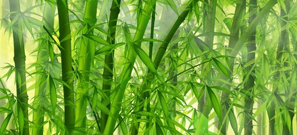 bamboo_1280x1024