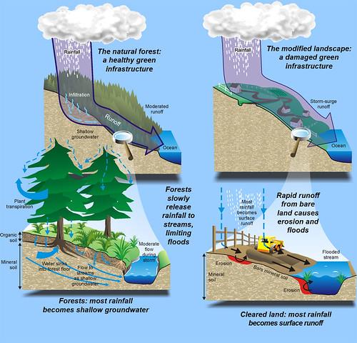 deforestación e inundaciones