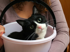 Does pink go well with my whiskers? (Dr. Hemmert) Tags: pet animal cat bucket sweet artemis