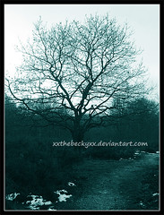 Empty Outside (tehbecky) Tags: trees winter leaves landscapes forests