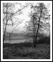 Palude (Marsh) (fabry ... ) Tags: italia marsh palude lodi villapompeiana ♥avision♥ circolofotograficopaullese fabryfb