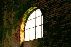 living wall (tragicomica) Tags: musgo janela parede