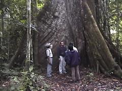 Jungle - Selva (Pierre♪ à ♪VanCouver) Tags: amazone iquitos peru perou tropicalforest amazonas