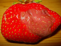 strawberrywoo (Urbanimp) Tags: red fruit strawberry spotty mrwoo wooscary