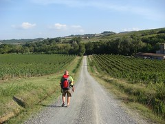 Via Francigena - Gambassi Terme - San Gimignano